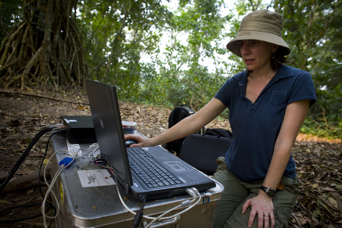 woman on laptop in forest / Photo by Justin Ide, Harvard News Office